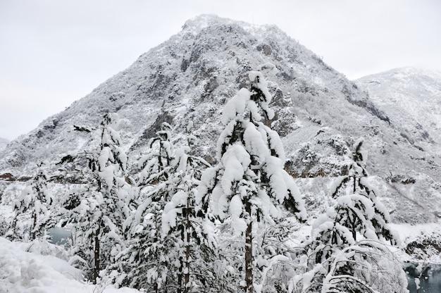 Inverno della neve della foresta del lago tree Foto Premium