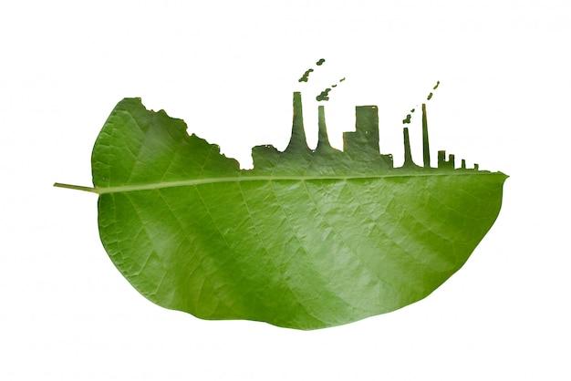 Fenditura della foglia dell'albero, impatto dell'inquinamento industriale.