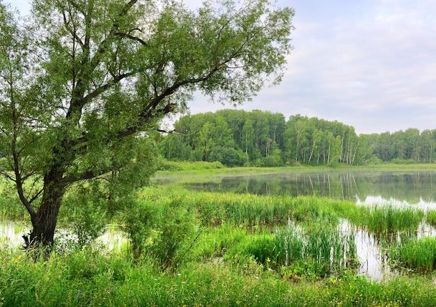 L'albero si sporse sull'acqua del lago sotto il cielo nuvoloso blu del mattino