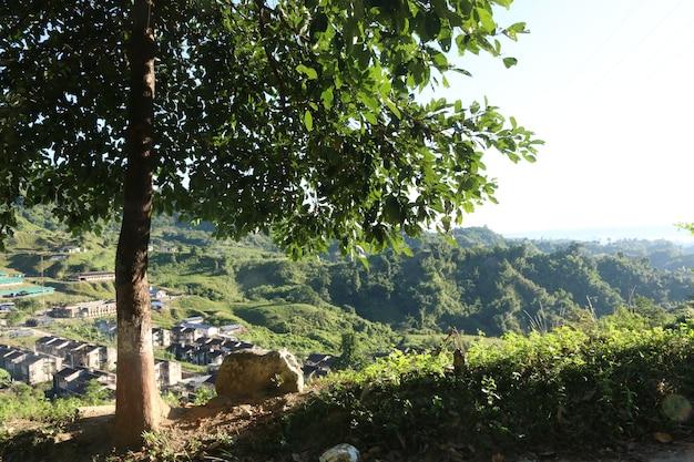 Albero e montagna
