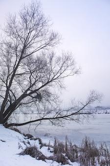 Albero vicino al fiume