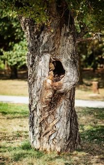 Albero nel parco con una depressione