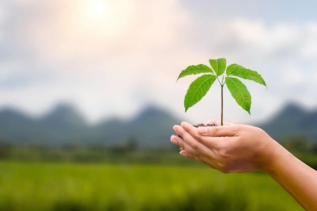 Albero piantato in mani umane con sfondo verde naturale. concetto di crescita delle piante e protezione ambientale nella giornata mondiale dell'ambiente