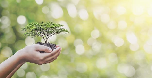 Piantare alberi sulle mani della famiglia di volontari per un concetto di campagna di responsabilità sociale ecologica e aziendale