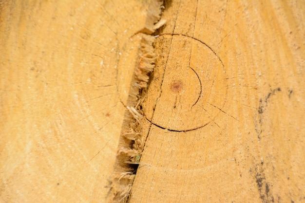 Legno di tronchi ad anello di albero. struttura organica naturale con superficie screpolata e ruvida. vista macro ravvicinata della sezione dell'albero in legno tagliato fine con crepe. superficie in legno con anelli annuali.