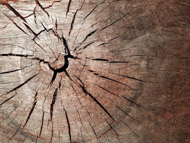 Struttura di legno stagionata vecchia degli anelli degli alberi con la sezione trasversale di un registro tagliato. la trama del tronco dell'albero. trama del registro di sezione trasversale.