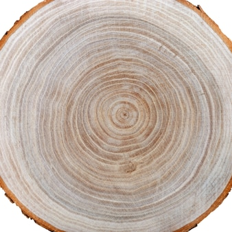 Anelli degli alberi sulla fetta di legno