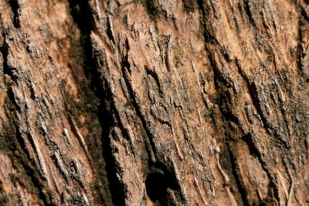 Fondo organico del primo piano delle coperture dell'albero