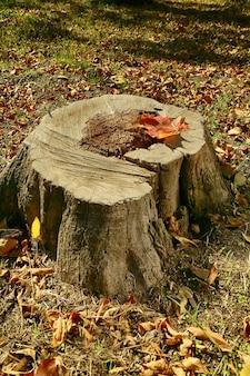 Tronco d'albero con foglia caduta nel parco