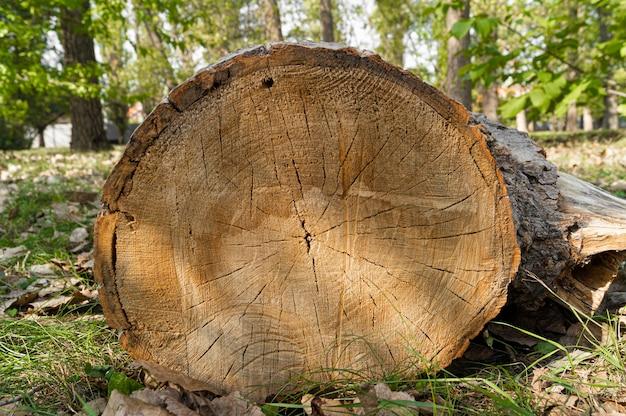Ceppo di albero nel parco cittadino