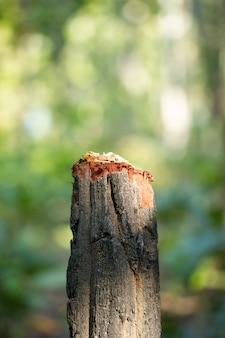 Ceppo di albero e sfondo naturale verde in foresta. concetto di conservazione della natura e riscaldamento globale. campagna per fermare la deforestazione.