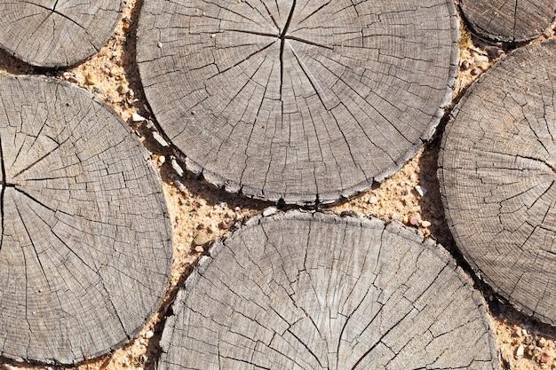 Sfondo di ceppi di albero sezione di taglio degli alberi struttura di legno del tronco di albero carino. fette nella sabbia
