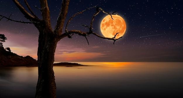 Albero che cattura la luna tra i suoi rami