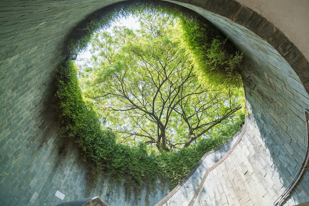 L'albero sul tunnel sotterraneo è una passerella in mattoni al parco