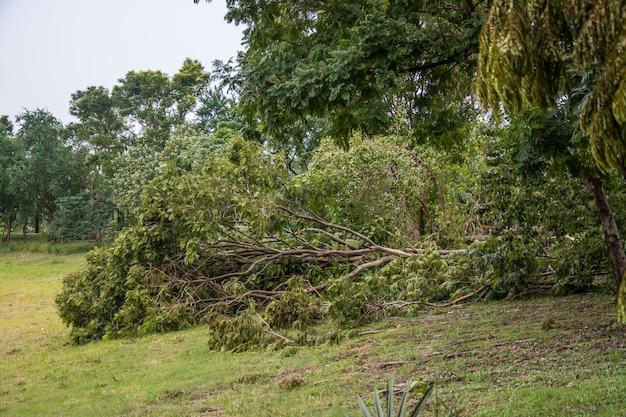 L'albero fu distrutto dall'intensità della tempesta