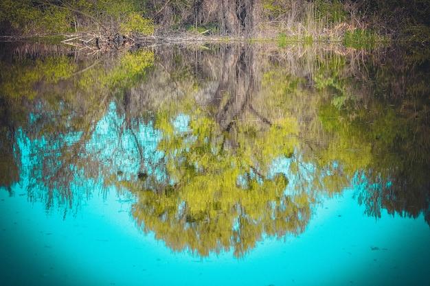 Albero con foglie fresche riflesse nell'acqua, filtro