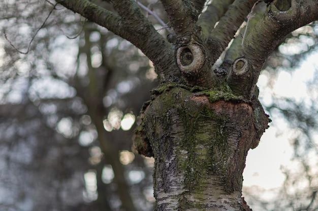 Albero con una faccia buffa pensante tempo primaverile