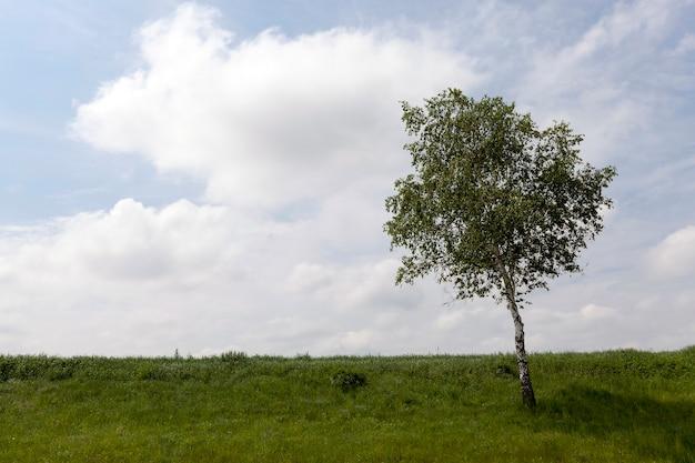 Un albero con foglie verdi che cresce su una collina. estate
