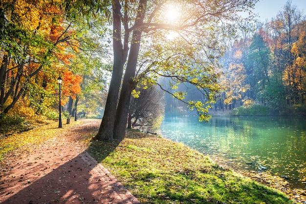 Un albero con le foglie che emettono luce alla luce del sole sui rami nel parco di autunno di tsaritsyno a mosca