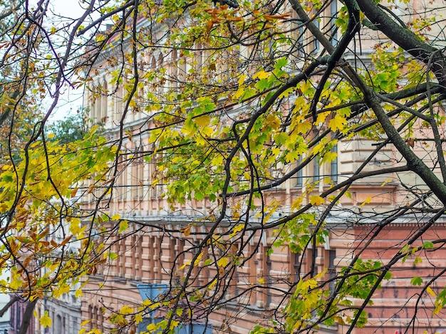 Albero con foglie autunnali gialle in una città moderna
