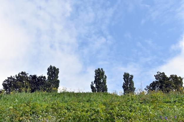 Alberi contro il cielo