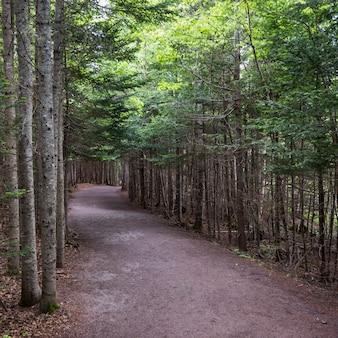Alberi lungo la strada nella foresta, hopewell rocks, bay of fundy, new brunswick, canada