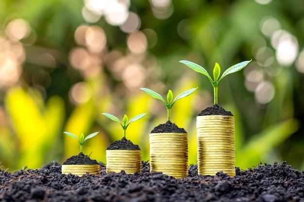 Gli alberi crescono con denaro e terreno fertile come idea finanziaria e di investimento