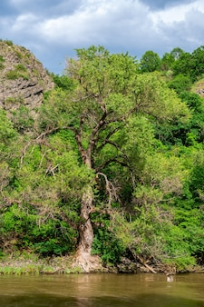Alberi sulle rive del fiume kura, natura.