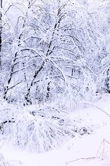 Alberi coperti di brina e neve nella foresta invernale
