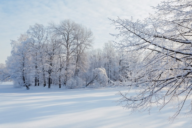 Alberi coperti di neve in una soleggiata giornata invernale a san pietroburgo, russia.
