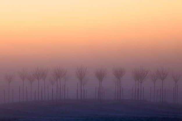 Alberi nella nebbia all'alba, bellissimo paesaggio mattutino estivo