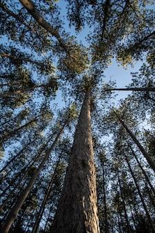 Alberi e sfondi forestali