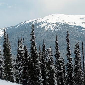Alberi in una foresta con la montagna innevata sullo sfondo, whistler, british columbia, canada