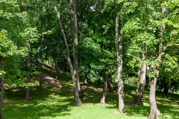 Alberi e fogliame verde nel parco estivo