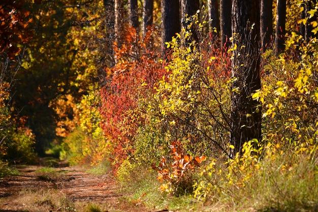 Gli alberi crescono cespugli di diversi colori, autunno
