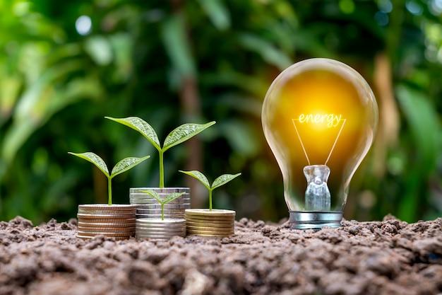 Gli alberi crescono da monete e lampadine a risparmio energetico etichettate energia, risparmio energetico e concetti di conservazione delle risorse ambientali.
