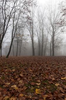 Gli alberi crescono su una collina. gli alberi seccano le foglie. sull'erba ci sono foglie cadute marroni. nebbia. autunno. primo piano fotografato.