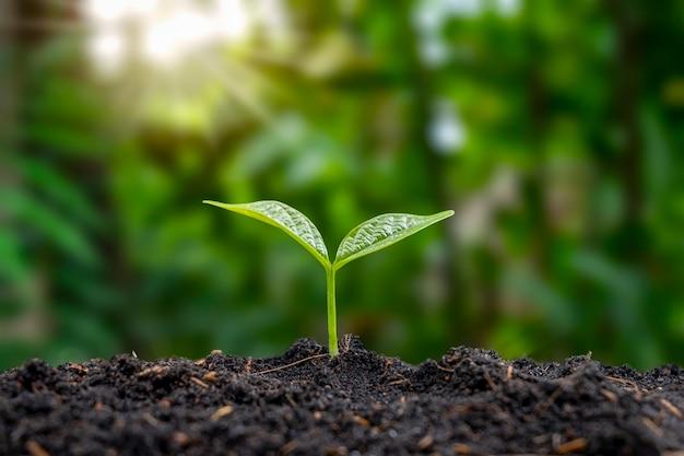 Gli alberi crescono su un terreno naturale e l'ombra verde offusca il concetto di agricoltura sostenibile e crescita delle piante.