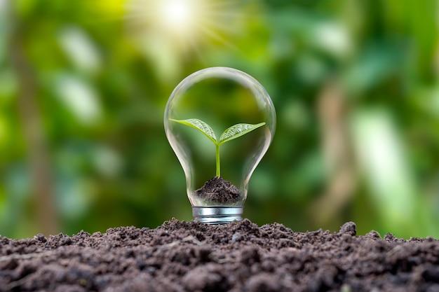 Gli alberi che crescono in lampadine a risparmio energetico ea risparmio energetico sono rispettosi dell'ambiente. concetto di energia rinnovabile alternative energetiche pulite per generare elettricità