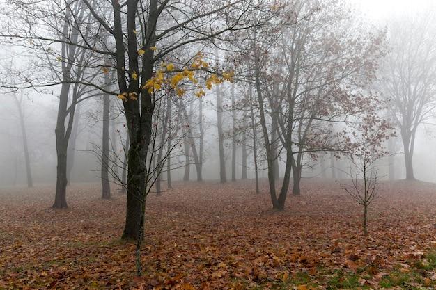 Alberi che crescono nel parco nella stagione autunnale. tenebrose foreste monotone foto