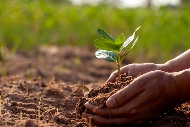 Alberi e mani umane che piantano alberi nel terreno