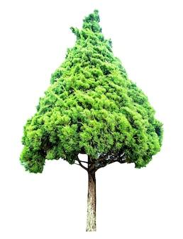 Alberi isolati su sfondo bianco. ritagliare e percorso. utilizzare per l'architettura e la decorazione design naturale. salva la terra salva la vita per pianta, giornata mondiale dell'ambiente