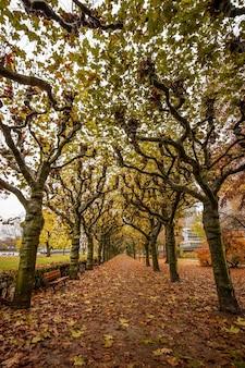 Alberi a nizza park a francoforte sul meno, germania