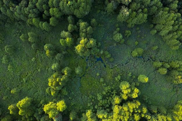 Alberi, canne e fiume, zone umide vicino alla foresta, vista dall'alto. meraviglioso paesaggio estivo, vista drone. sfondo naturale astratto.