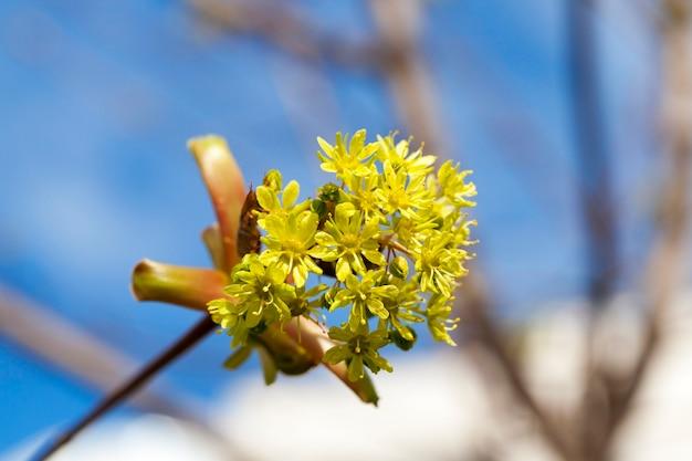 Alberi in primavera, giovani foglie verdi sugli alberi