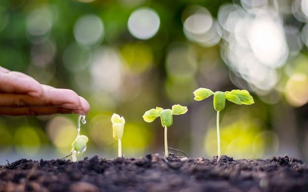 Alberi che crescono su un terreno fertile