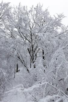 Alberi in inverno
