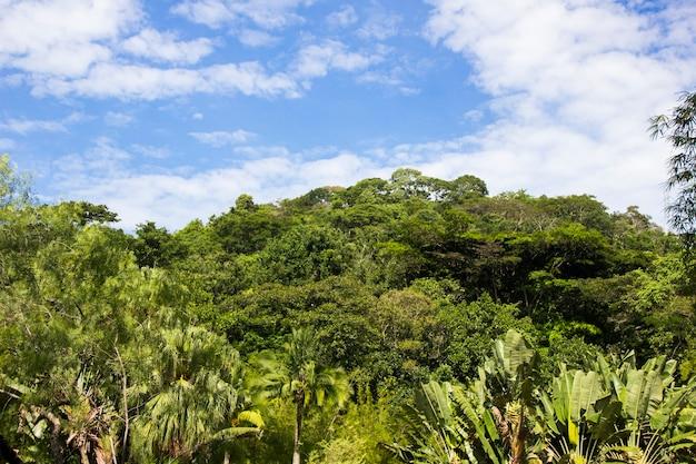 Alberi con foglie verdi e un bel cielo azzurro con nuvole a rio de janeiro, brasile.