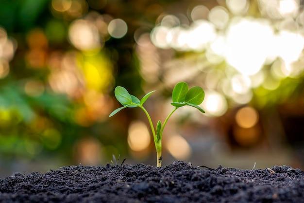 Alberi con foglie verdi che crescono sul terreno in sfocato sfondo verde natura, rimboschimento e concetto di protezione ambientale.