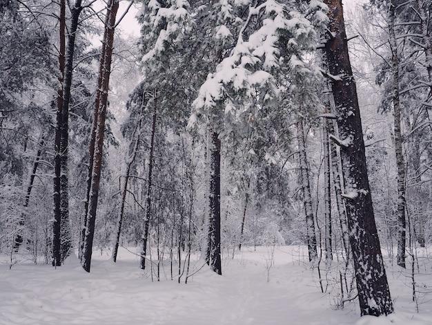 Alberi con neve in winter park, foresta invernale innevata